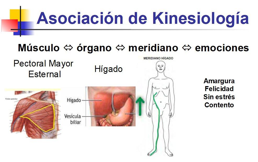 Asociación del hígado en kinesiología